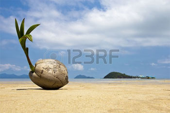 young-coconut